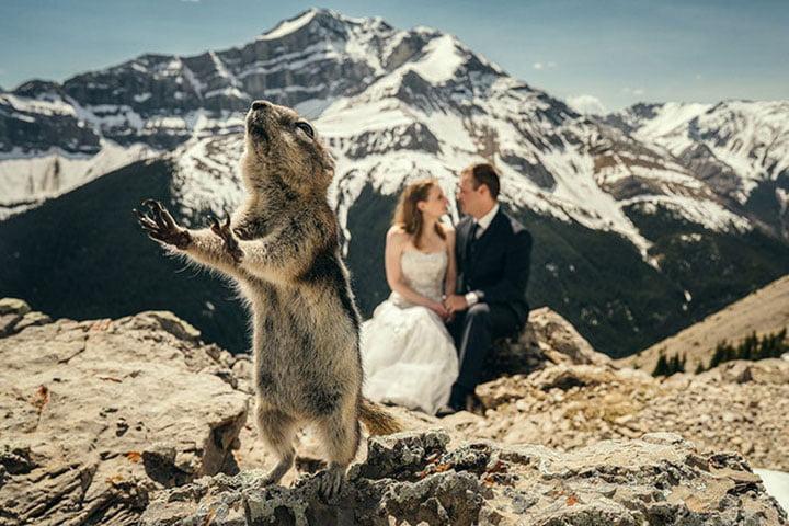 20 фото з весіль, які не повинні були потрапити в інтернет