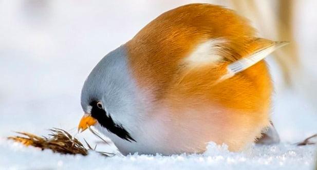 Дивовижні фотографії справжніх Angry Birds