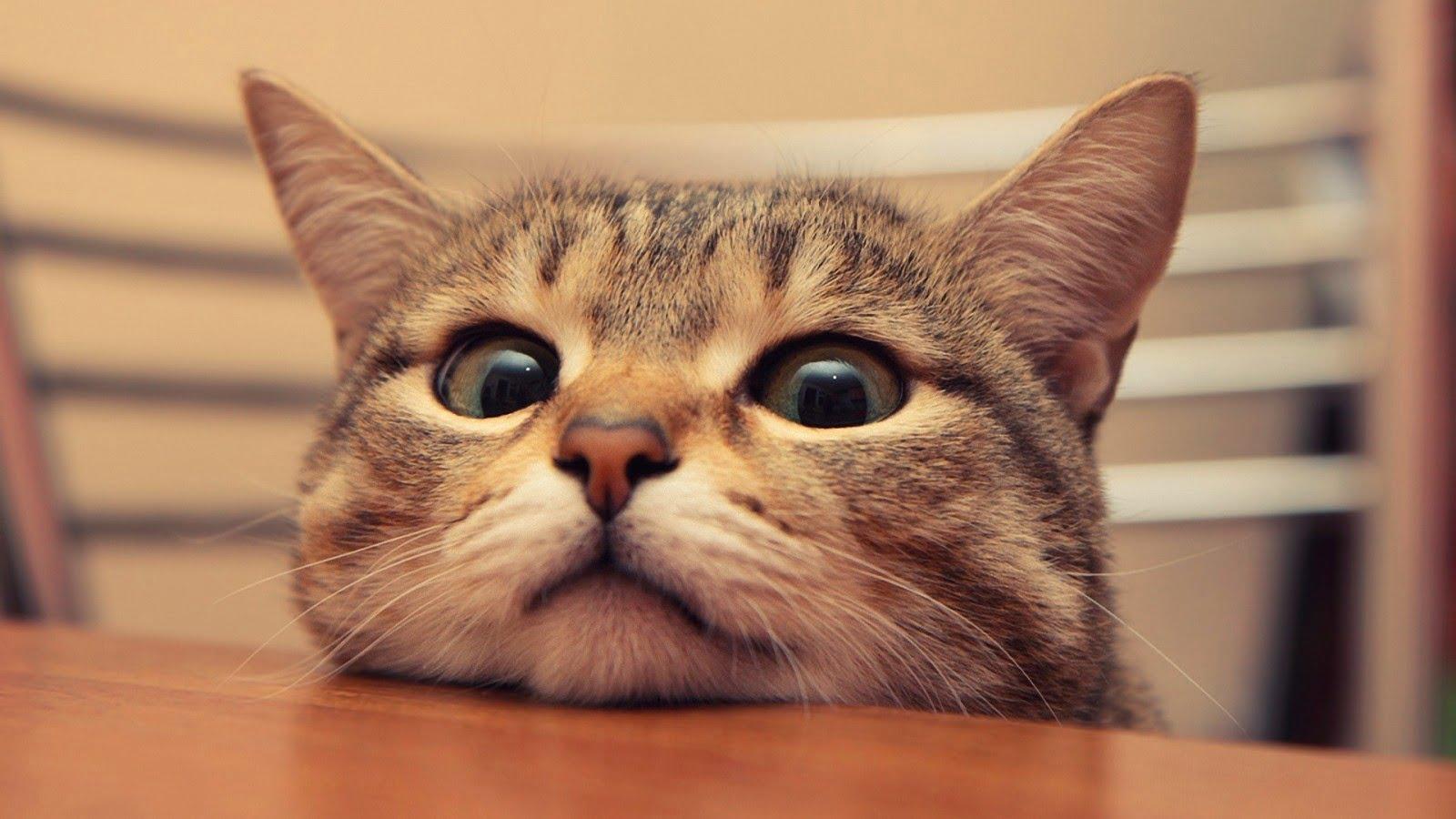 10 прикладів того, як виглядає справжня котяча цікавість