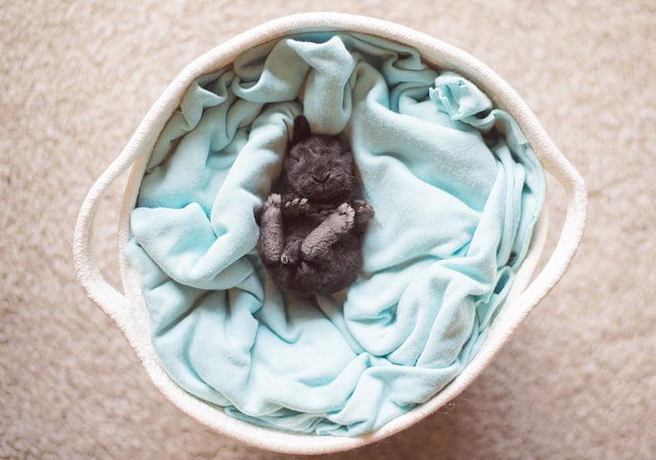 17 фотографій тварин, які можуть розтопити лід у кожному серці