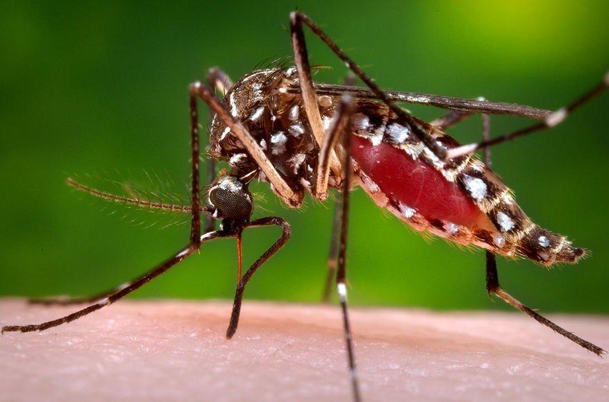 Білл Гейтс переможе комарів 11