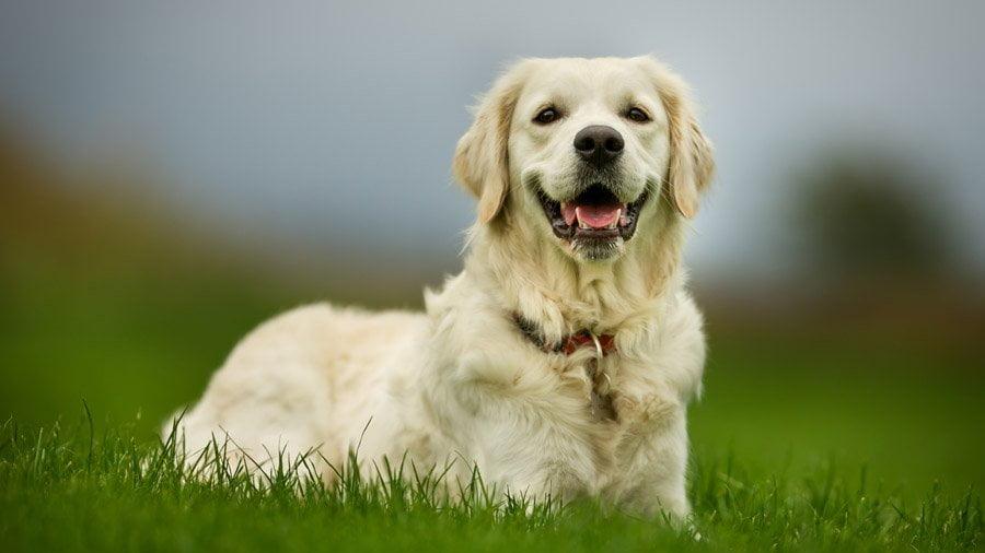 Собаки - справжні друзі людини, з'ясували вчені
