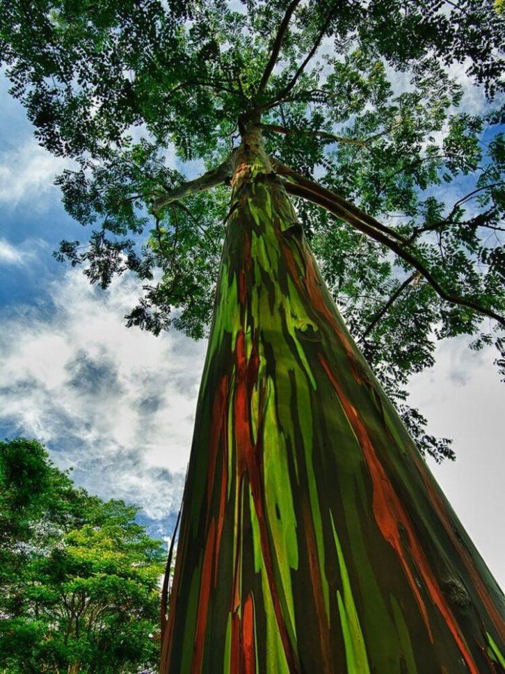 15 дерев, які начебто з іншої планети
