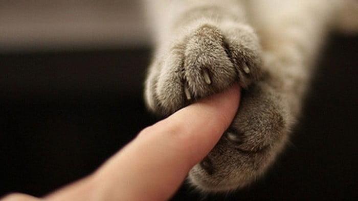 Як кішка показує про присутність негативу в будинку