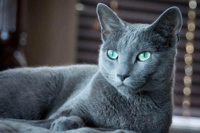 10 дорогих і рідкісних котів