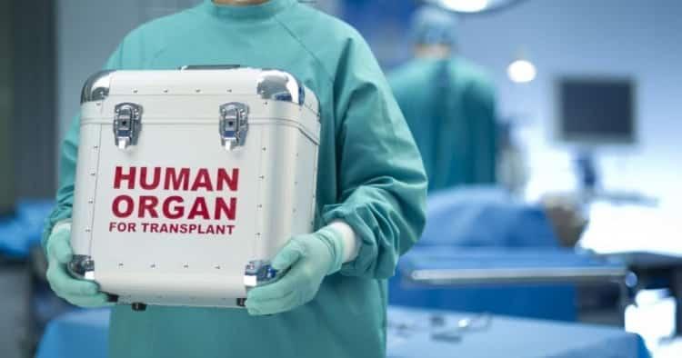 Чи можна пересадити нирку в підвалі: 10 міфів про трансплантацію органів і їх спростування