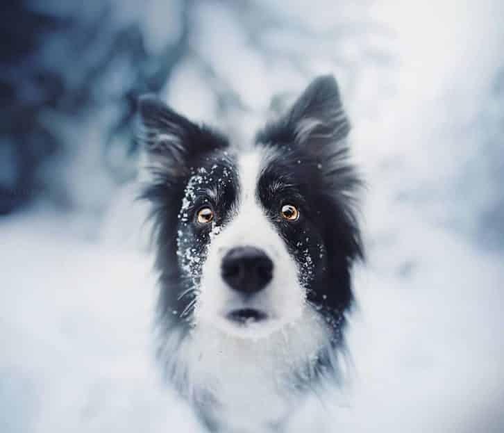 35 найкрасивіших фото собак, яких я коли-небудь бачила