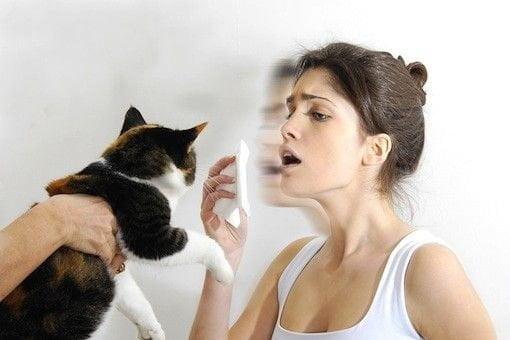 6 способів знизити алергічну реакцію на котів