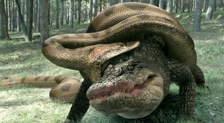 Відео: Битви титанів - анаконда проти крокодила