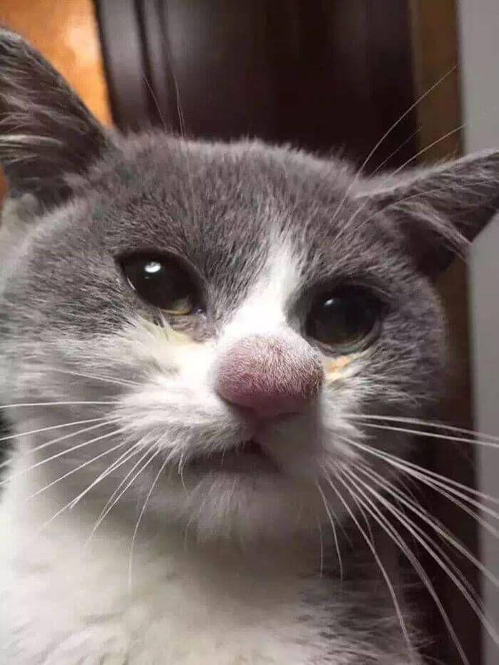 15 кішок, яких вкусили бджоли