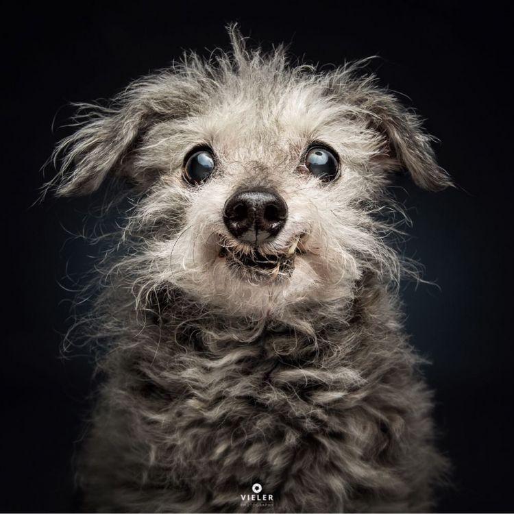 Фотограф робить емоційні знімки собак в той момент, коли вони ловлять вкусняшки