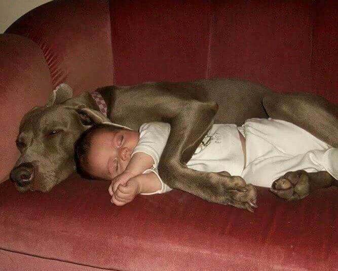 Докази, що кожній дитині потрібна собака