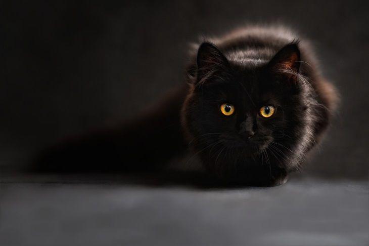 Вчені: домашня їжа може бути небезпечною для здоров'я котів