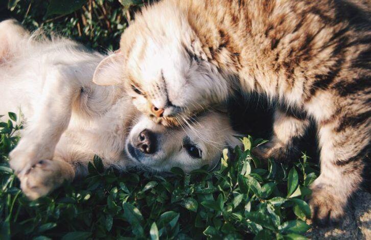 Зоологи пояснювали, чому одні люди люблять кішок, а інші - собак