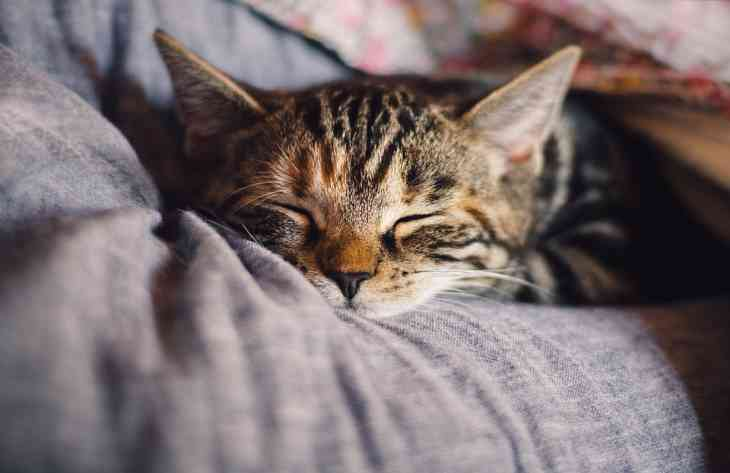 Ознаки нездужання кішок озвучили ветеринари