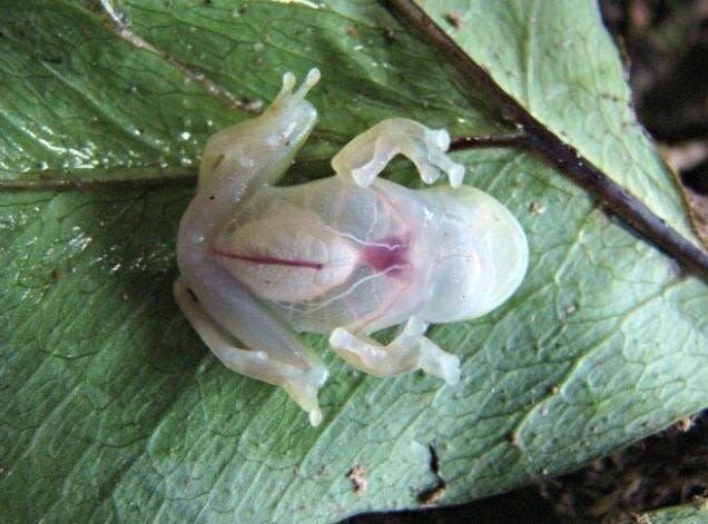 Фото, які показують, що у Матері Природи є багато тузів в рукаві 6
