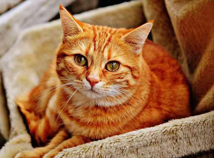 Вчені довели, що муркотіння котів загоює рани у людини