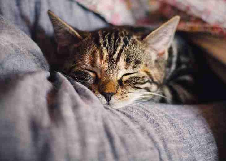 Як зрозуміти, що ваша кішка щаслива