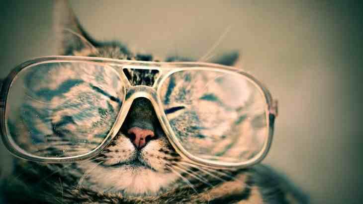 Як виховати слухняного кота