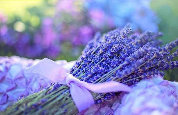Експерти склали список рослин, які сприяють хорошому сну